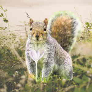 do grey squirrels eat birds