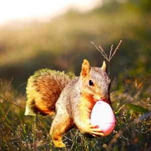 do red squirrels eat birds