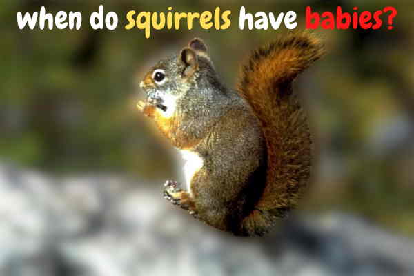 When Do Squirrels Have Babies ? How Many Babies Do Squirrels Have?